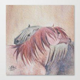 Grooming Shetland Ponies Canvas Print
