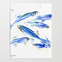 Blue Fish Aquatic fish design Poster