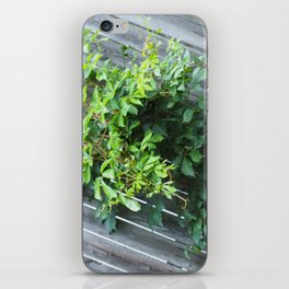 Vine iPhone Skin