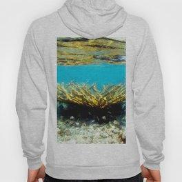 Watercolor Sealife, Elkhorn Coral 01, St John, USVI, Watch Your Step! Hoody