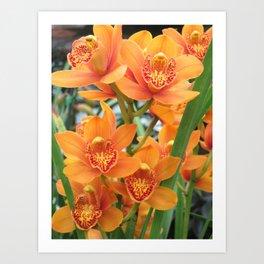 Orchid in Orange Art Print