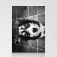 border collie Stationery Cards featuring Tri-coloured border collie. by liamgrantfoto