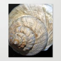shell Canvas Prints featuring Shell by Brian Raggatt