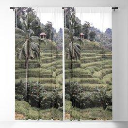 Rice Terraces Palmtree Landscape Art Print   Ubud Bali Indonesia Photo   Island Travel Photography Blackout Curtain