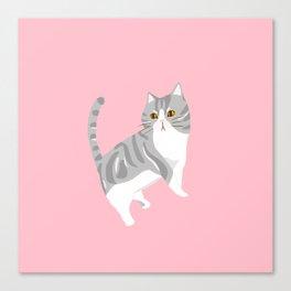 American Shorthair Mix Cat Canvas Print