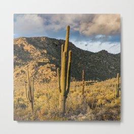 """Sonoran Desert Scene 10"" by Murray Bolesta Metal Print"