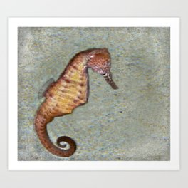 Seahorse Meditation Art Print