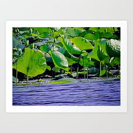 Lilly C. Pond Art Print