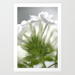Soft flower Art Print