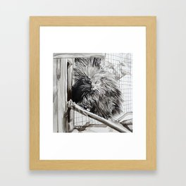 Alaskan Porcupine Framed Art Print