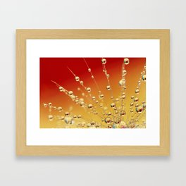 Sunrise Dandy Drops Framed Art Print