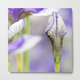 Flight of Butterflies Iris Metal Print