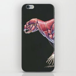 Arctodus Simus Muscle Study (No Labels) iPhone Skin