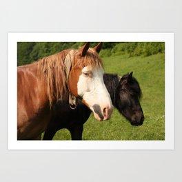Horses photo Art Print