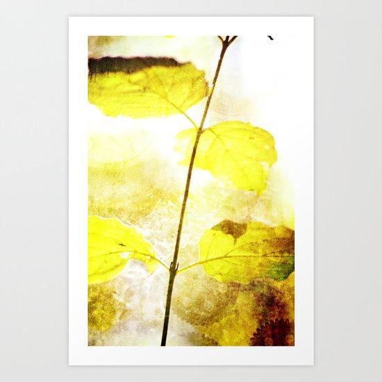 Time Of Natural Art Print