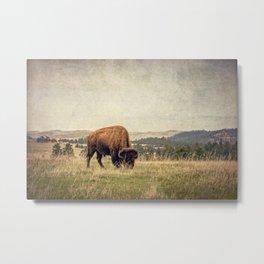 Bison Land Metal Print