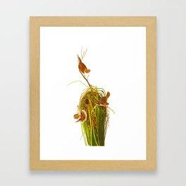 Marsh Wren Framed Art Print