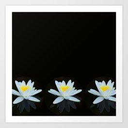 Waterlily Flowers On Black Background #decor #society6 #buyart Art Print