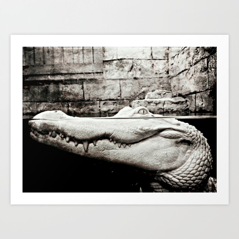 Albino Alligator Art Print by Alondrahanley PRN4093823