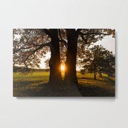Trees in the evening sun Metal Print