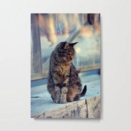 feline beauty Metal Print
