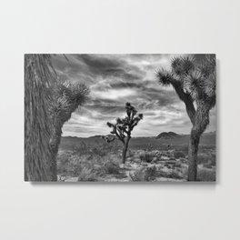 Joshua Tree Bloom 2 Metal Print
