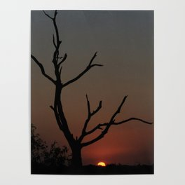 Tree in the solitude Poster