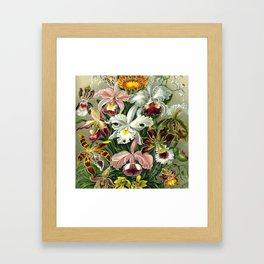 Vintage 1865 Botanical Orchids Framed Art Print