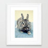 bunny Framed Art Prints featuring Bunny by Falko Follert Art-FF77