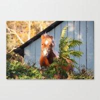 pony Canvas Prints featuring Pony by Linda Fields