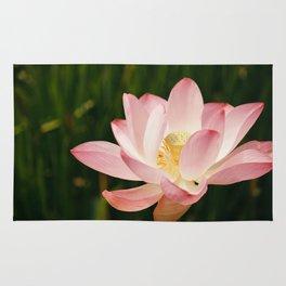 Radiant Lotus Rug