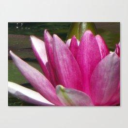 Lotus blossom macro Canvas Print