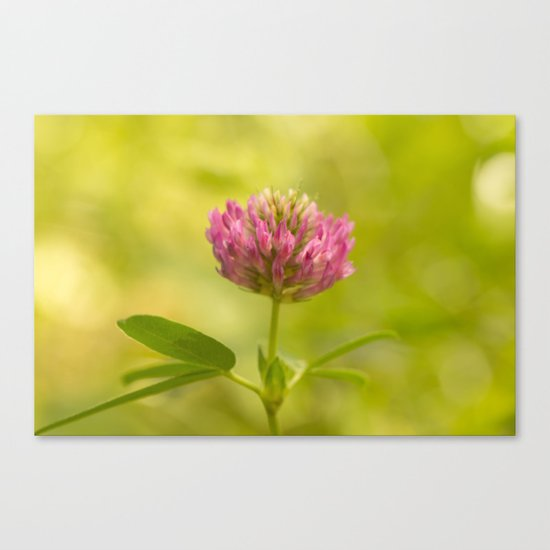 Red clover in August Canvas Print