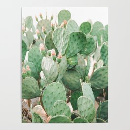 Cactus Flowers Pink And Green Desert Life Poster