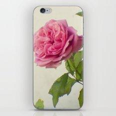 A single rose iPhone & iPod Skin