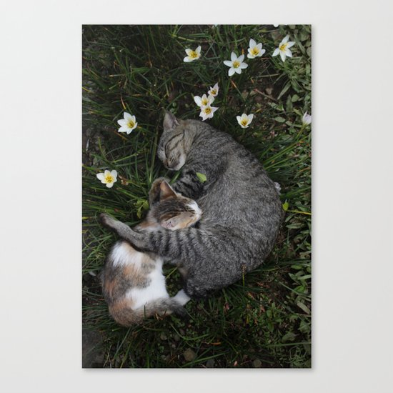 Sleep [A CAT AND A KITTEN] Canvas Print