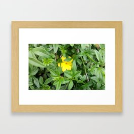 Yellow  Life Framed Art Print