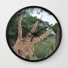 3 giraffes Wall Clock