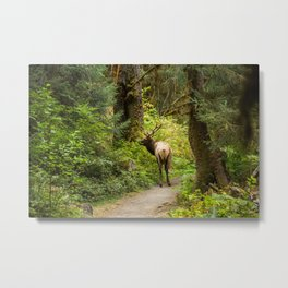 Elk of the forest Metal Print