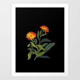 Calendula Officinalis Mary Delany Floral Flower Paper Collage Delicate Vintage Black Background Art Print