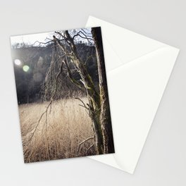 A big leafless tree in a swamp Stationery Cards