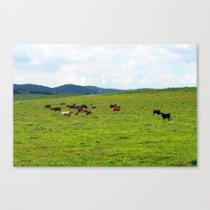 2007 - Bulls On Parade Canvas Print