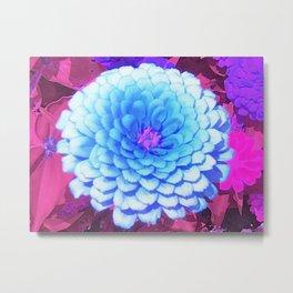 Pretty Blue Zinnia in the Purple Summer Garden Metal Print