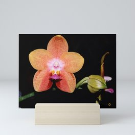 1st Magenta Peachy Phalaenopsis Orchid Mini Art Print