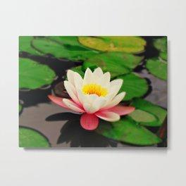 White water flower Metal Print