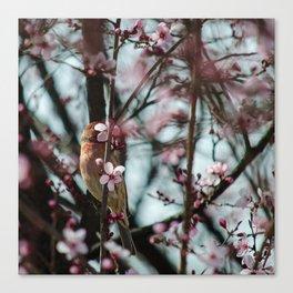 Peek-A-Boo - Spring Finch Canvas Print