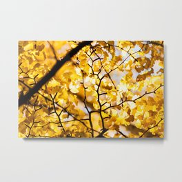 Yellow Japanese Gingko Metal Print
