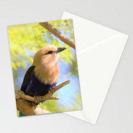 Sunshiny  Roller Bird by Reay of Light Photography Stationery Cards