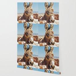 Donkey photo Wallpaper