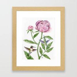Ruby-Throated Hummingbirds & Peony Framed Art Print